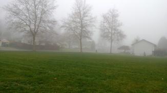 biking to school through a park