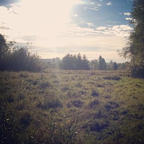 September, Marymoor Park